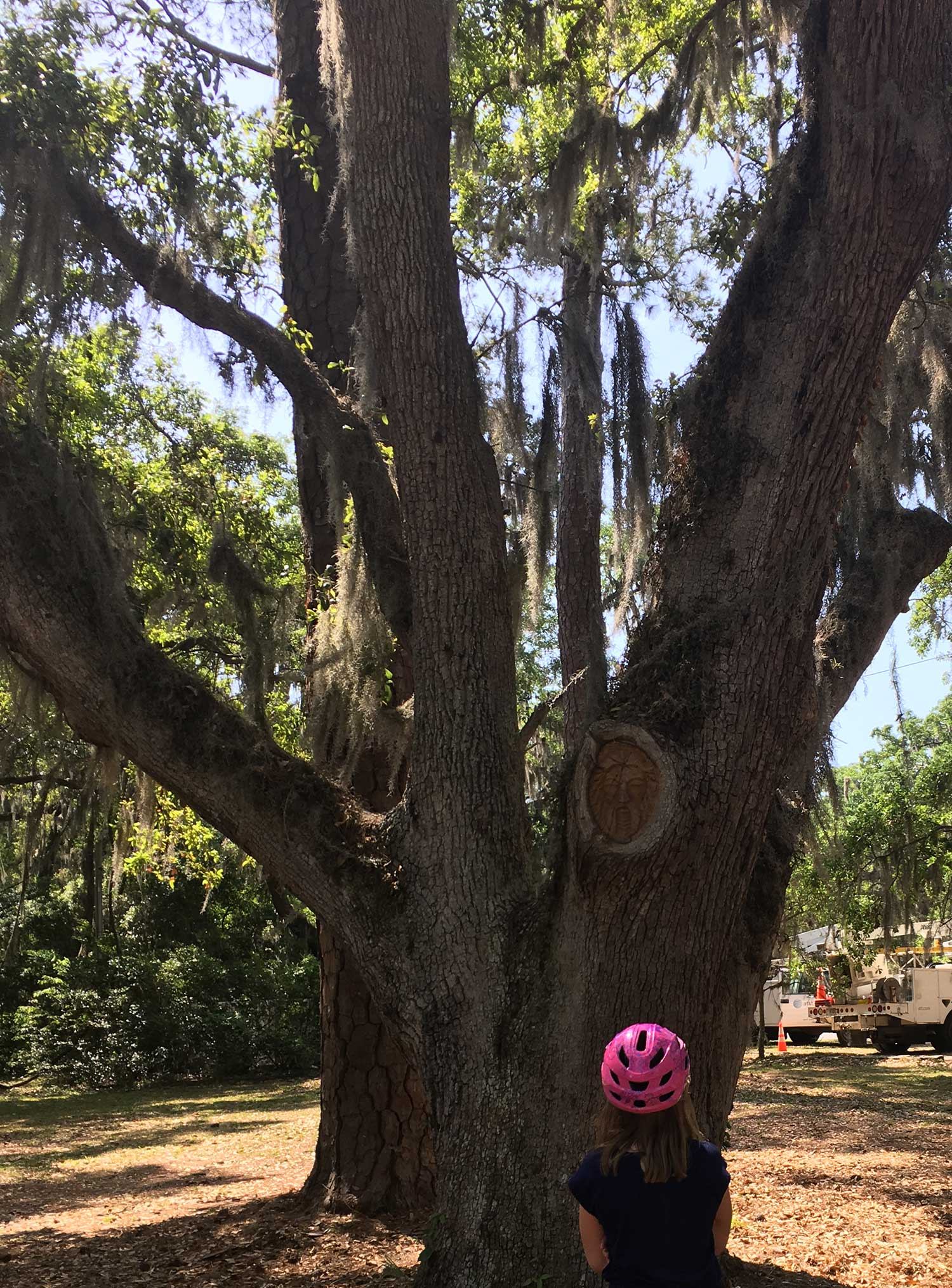 Finding Island Tree Spirits on St Simons Island