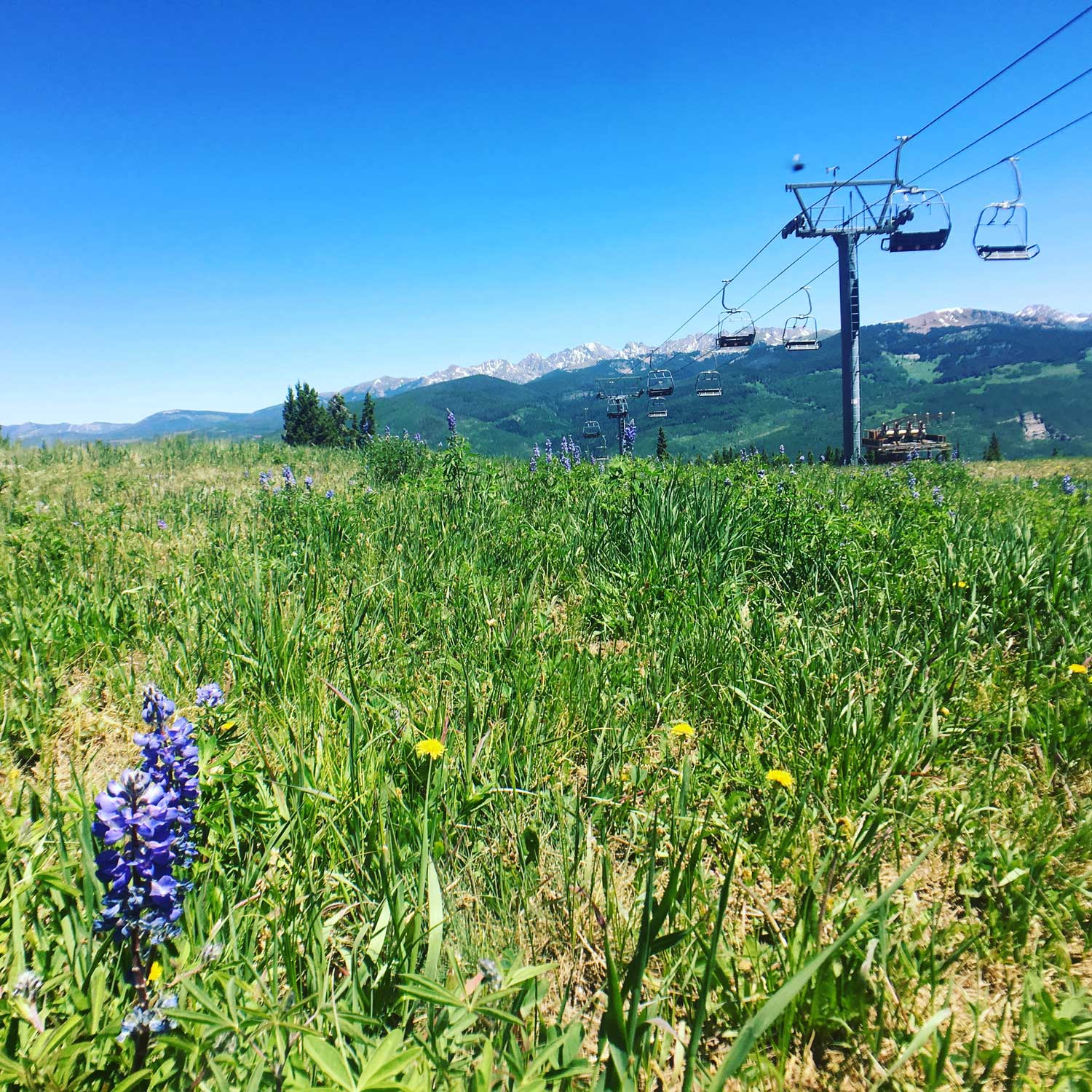Your Vail summer family vacation really needs to include a ride up the gondola for the views!