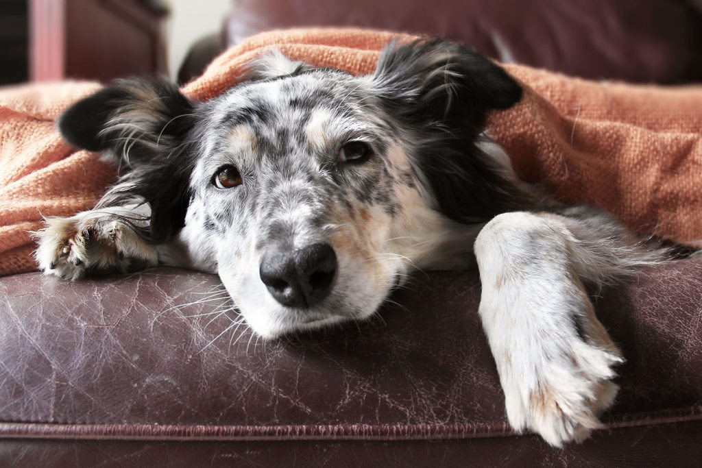 Dog Friendly Hotels Colorado