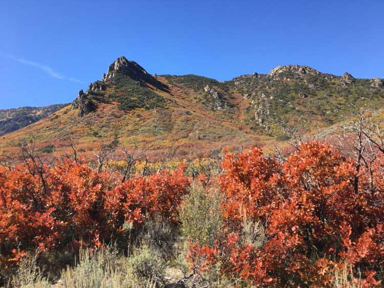 Palisade Ranch Horseback riding fall colors