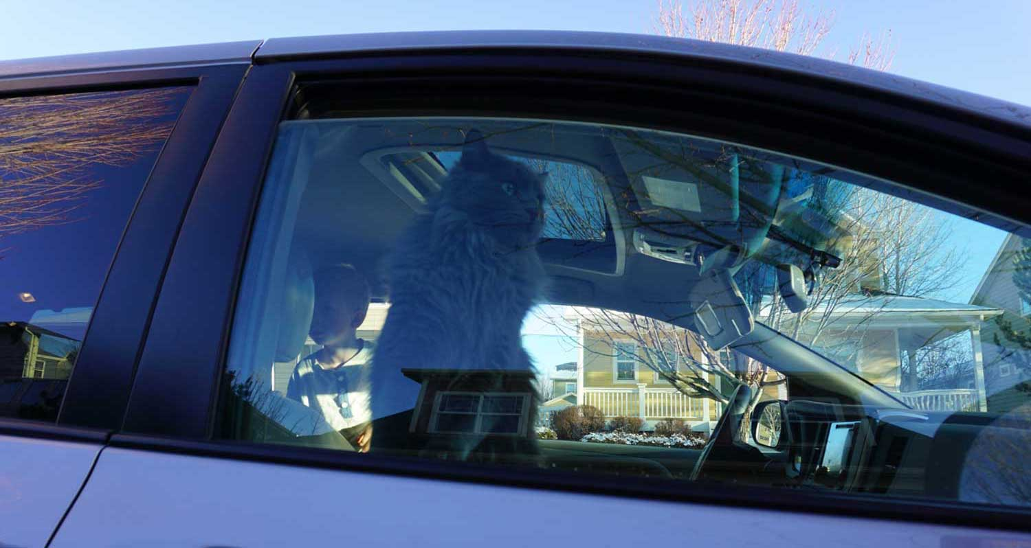 What to do when there's a mouse in the car?