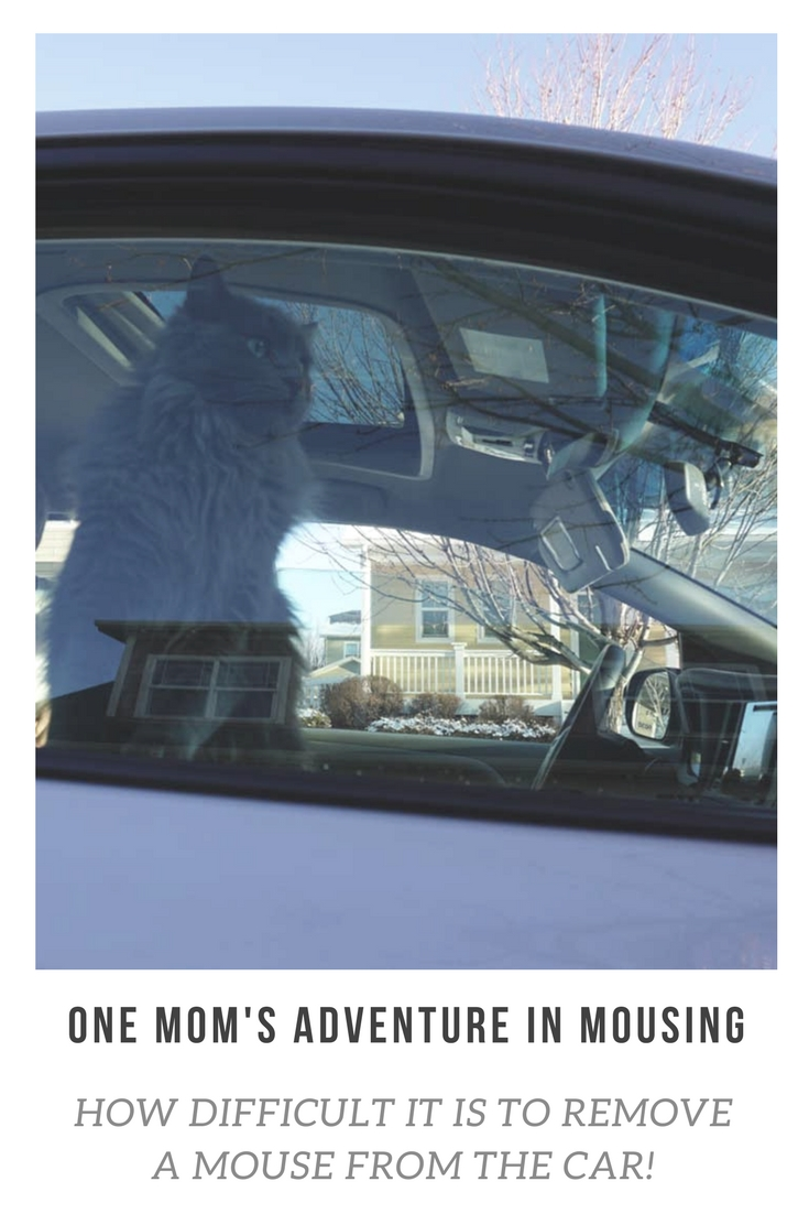 Oh, what to do when there's a mouse in the car?! One mom's adventure in mousing...