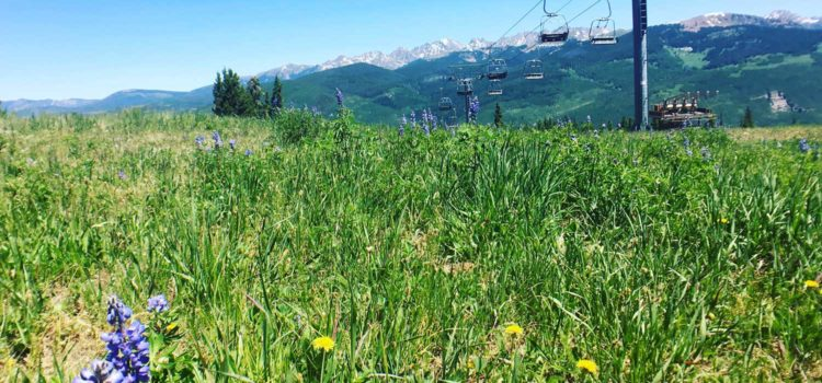 Summer on Vail Mountain