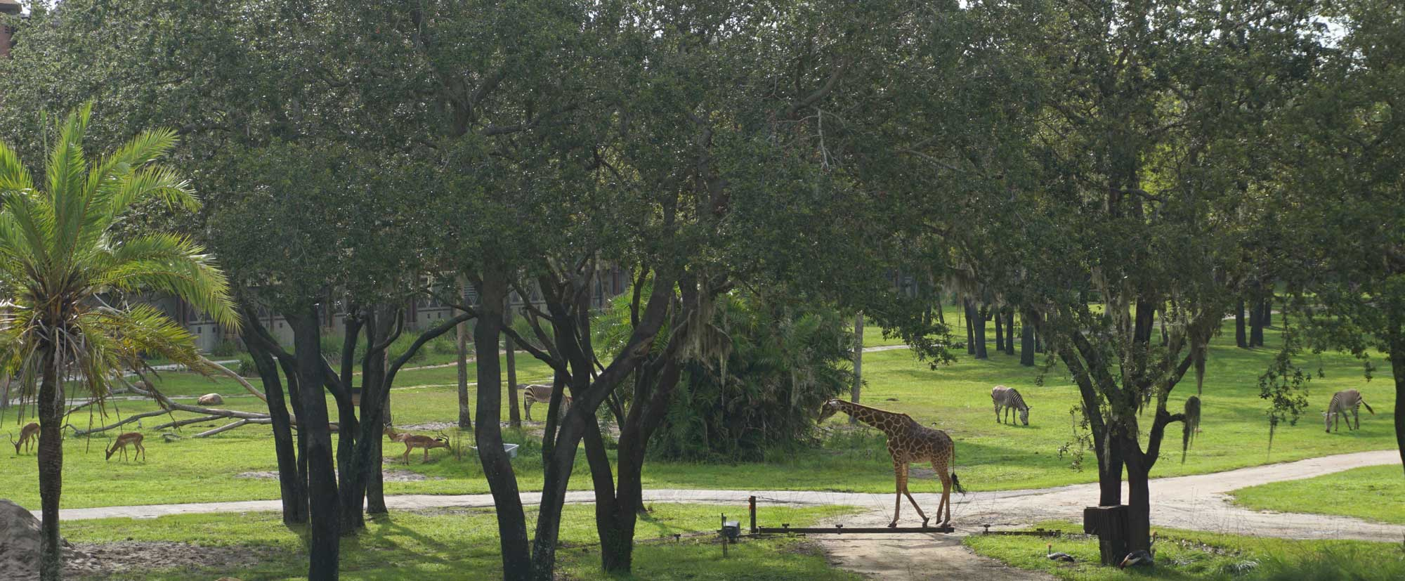 Animal Kingdom Lodge is another place to stay at Disney World.