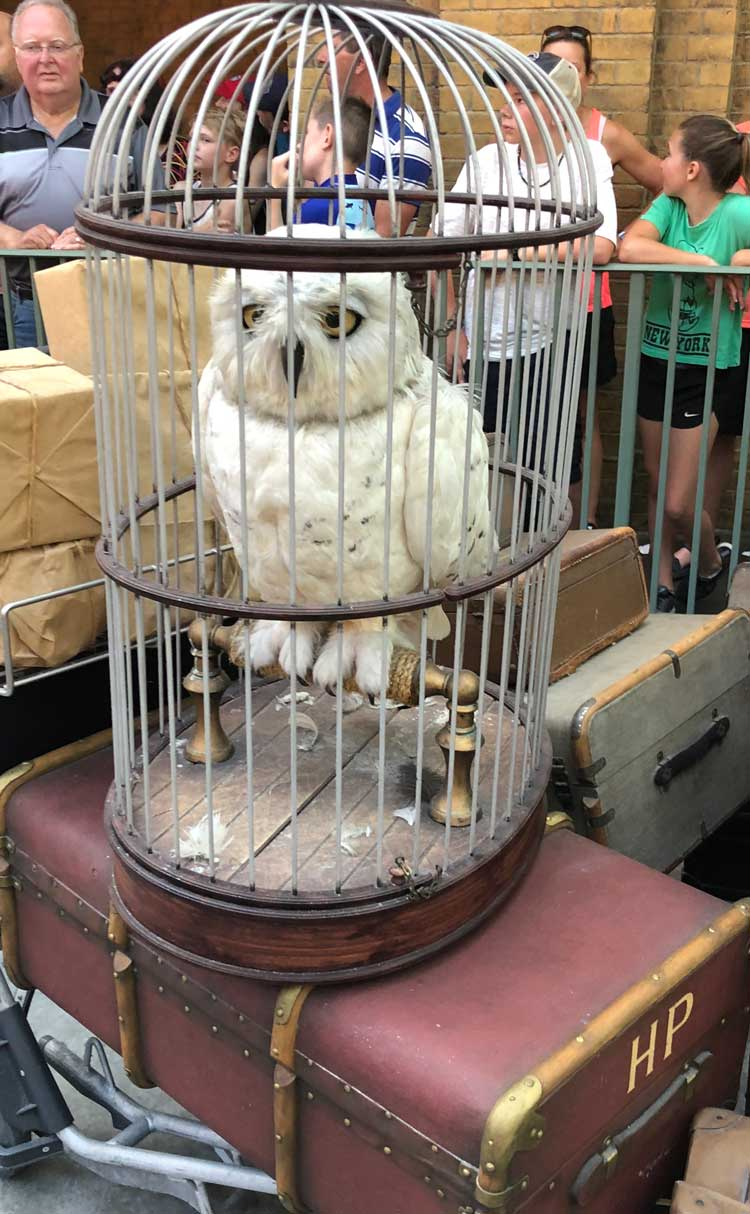 Hedwig watches passenges board the Howarts Express