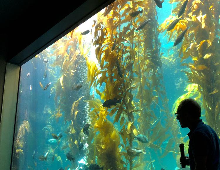 The Kelp Forest at Birch Aquarium in La Jolla San Diego.