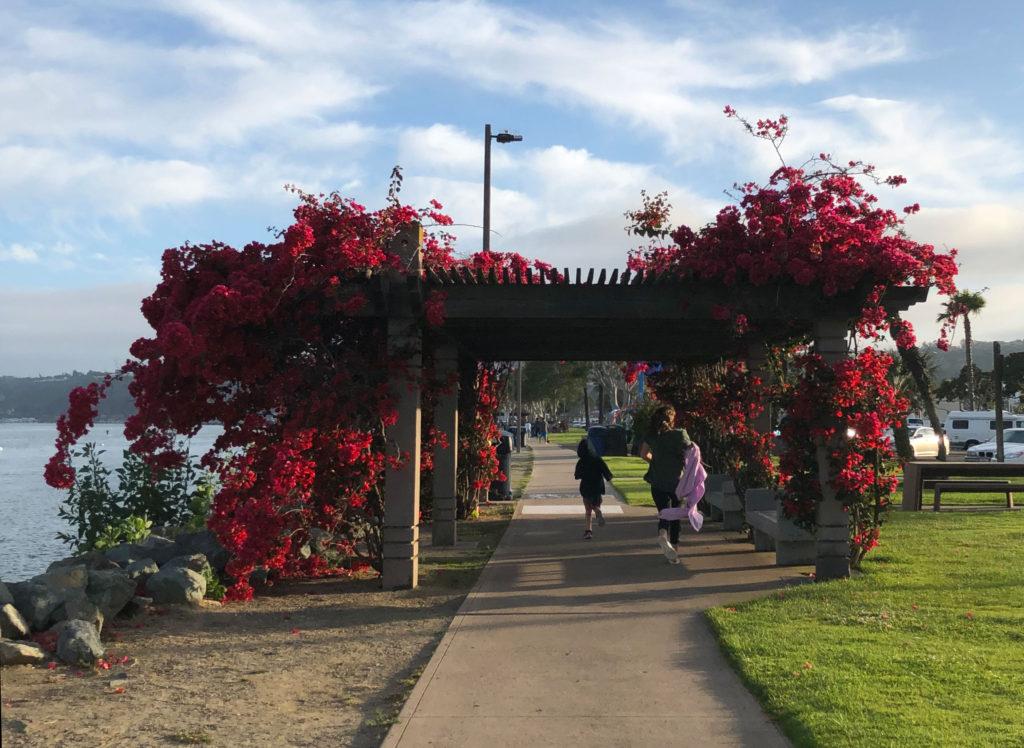 Lovely flowers cascade down arbors along the Shelter Island San Diego sidewalks.