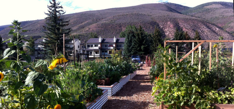 One Mom's Adventure in Gardening with Kids: From Plot to Container