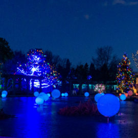 holiday lights at Denver Botanic Garden