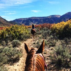Colorado Horseback Riding Fun
