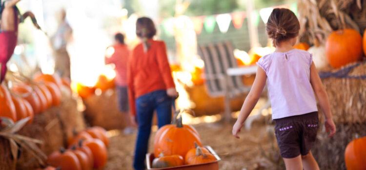 Colorado Pumpkin Patches for Fall Family Fun