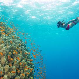 Best Snorkeling in Hawaii
