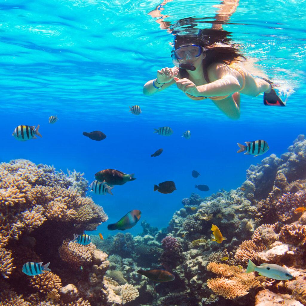 snorkeling in Kona Hawaii