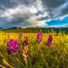 Where to Find Colorful Colorado Wildflowers