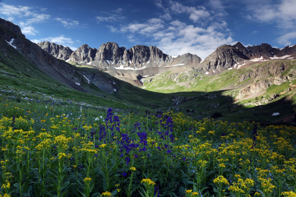 colorado wildflowers high in the Rocky Mountain