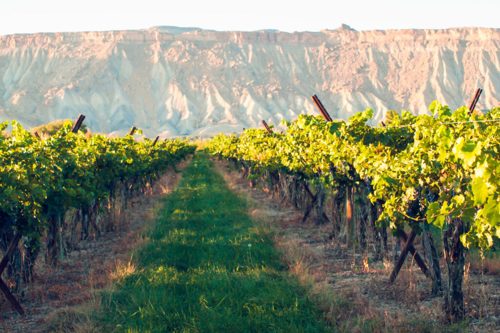 Grand Valley home to many Colorado wineries